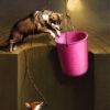 Arteclat - Fuchs und Wolf im Brunnen - Siegfried Zademack